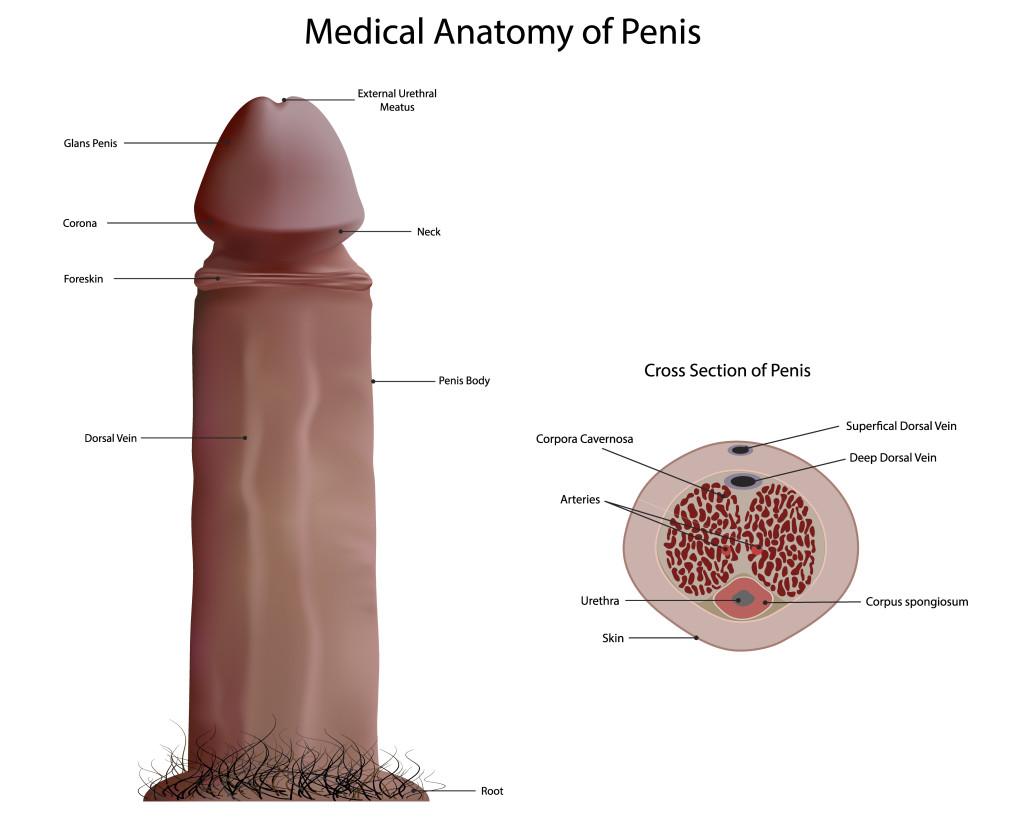 Pic s e x penis nude scene